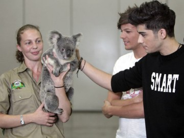 zouis with a koala bear:)