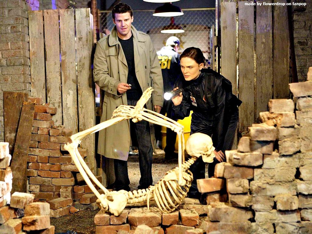 bones wallpaper bones wallpaper 30635259 fanpop
