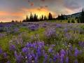 Bukovina, land of flowers … - romania fan art