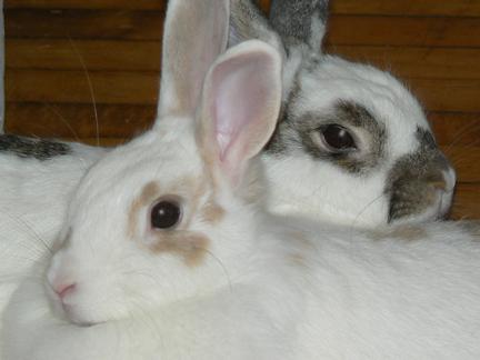 bunny   bunny rabbits photo 30656211   fanpop