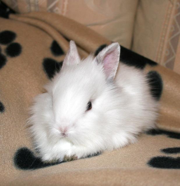 bunny   bunny rabbits photo 30656331   fanpop