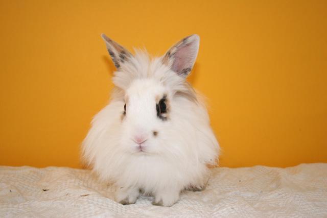 bunny   bunny rabbits photo 30656369   fanpop