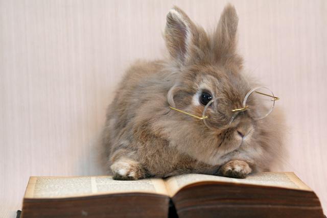 Bunny - Bunny Rabbits Photo (30656386) - Fanpop