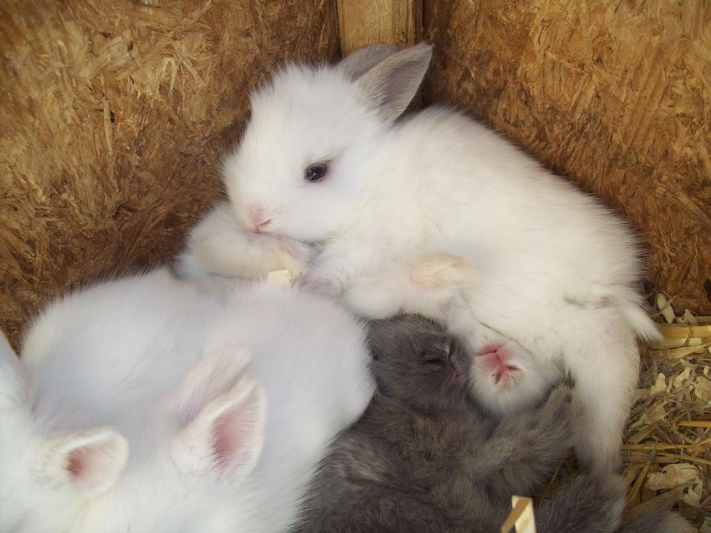 bunny   bunny rabbits photo 30656698   fanpop