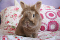 Bunny  - bunny-rabbits photo