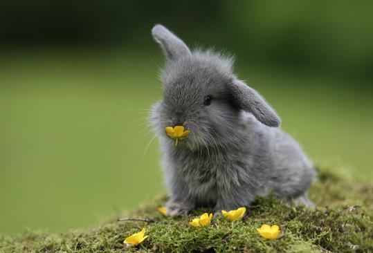 Bunny-bunny-rabbits-30657027-539-366.jpg