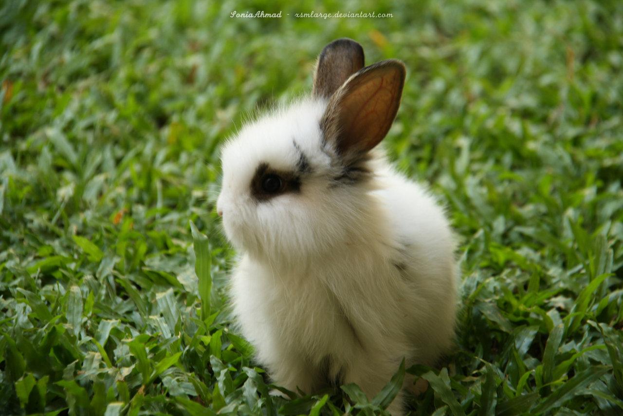Bunny Rabbits images B...