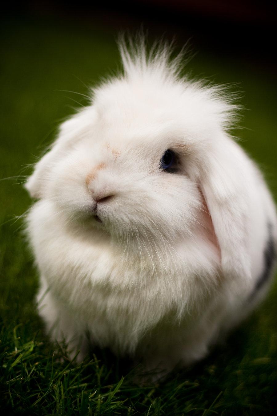 Bunny - Bunny Rabbits ...