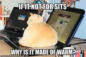 Butt Cat