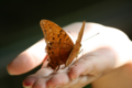 schmetterling on Hand
