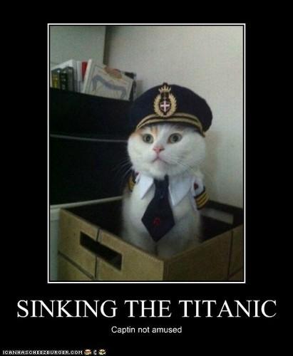 Cat VS Titanic