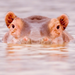 Cute animals - animals icon