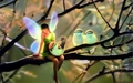 Fairy&amp;Birds - fairies wallpaper