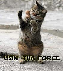 Jedi Cat - lol Photo
