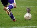 Kitty with a soccer ball!