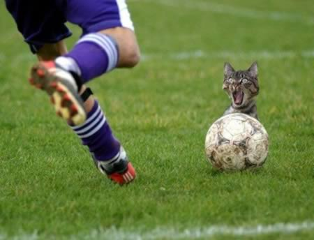Kitty with a soccer ball! - cats Photo