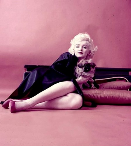 Marilyn Monroe wallpaper probably with bare legs, hosiery, and tights titled Marilyn Monroe