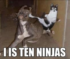 Ninja cat - lol Photo