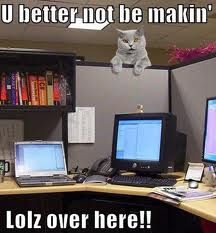 Peeping Tomcat