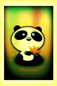 arcobaleno Panda