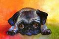 arco iris Pug