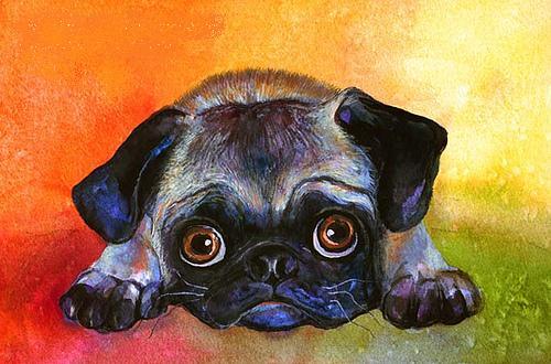 pelangi, rainbow Pug