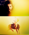 Renly Baratheon - house-baratheon fan art