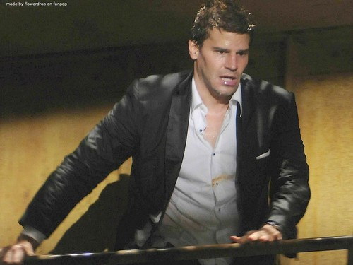 Seeley Booth wallpaper titled Seeley Booth wallpaper