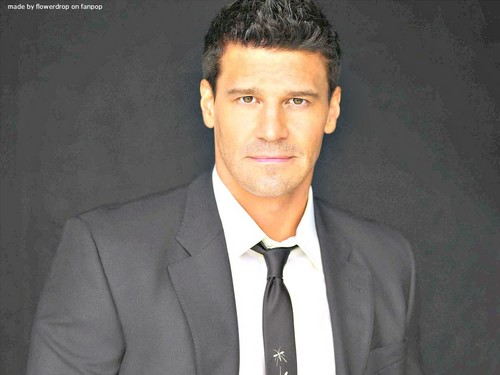Seeley Booth wallpaper containing a business suit titled Seeley Booth wallpaper