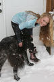 Snow Beast - danielle-chuchran photo