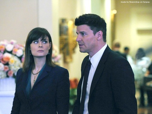Temperance Brennan fondo de pantalla