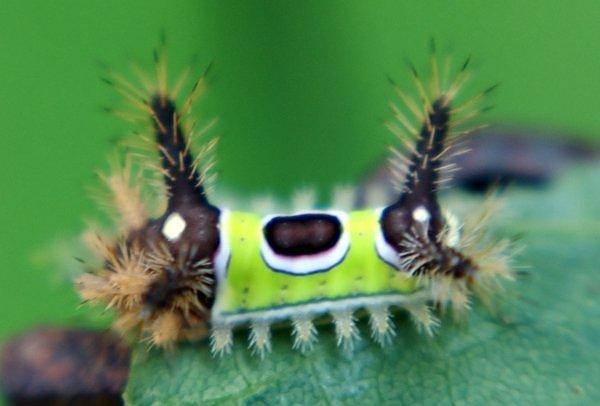 cute creepy crawly caterpillar