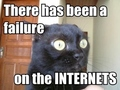 lolcat is a concerned cat - lol-cats photo