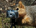 squirrel with a camera - squirrels photo