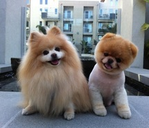 two cute puppies *_*