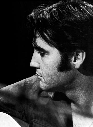~Elvis~