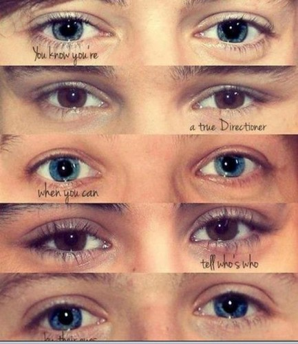 One Direction wallpaper containing a portrait called 1D eyes