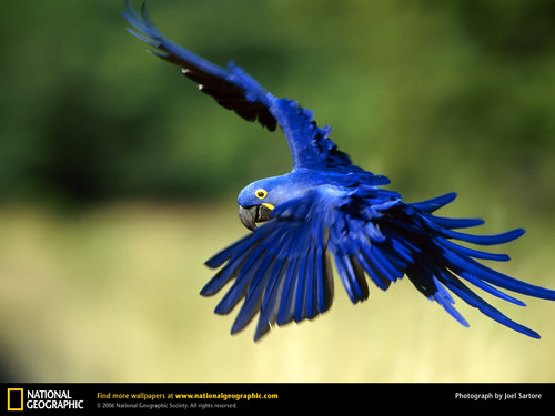 Check out Macaws (under reconstruction)