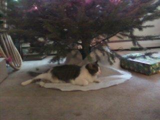 क्रिस्मस Kitteny