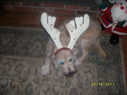 Christmas mutt