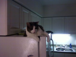 Cosmo on fridge