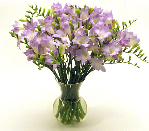 Freesia - flowers Photo