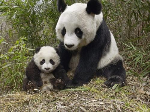 Mama and Cub!