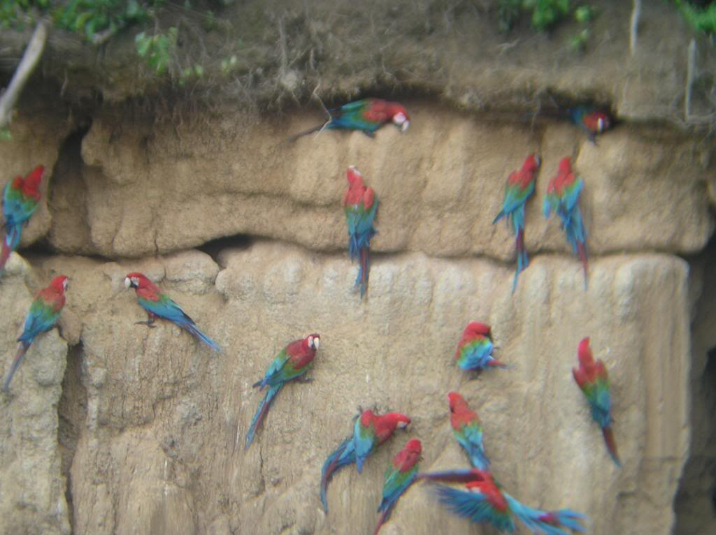 Parrots images mineral wall hd wallpaper and background for Mineral wall