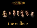 twilighters - New Moon Wallpapers wallpaper