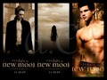twilighters - New Moon wallpaper