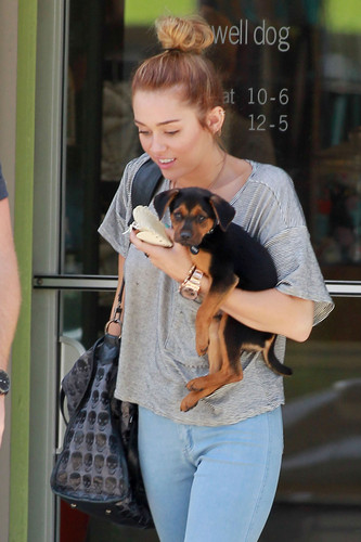 Shopping with Liam and Happy in Studio City [11th May]