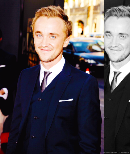Tom Felton - tom-felton Photo