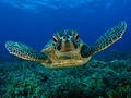 Turtle - turtles photo