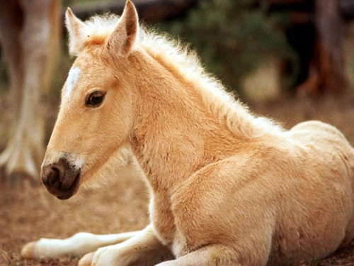 baby horse